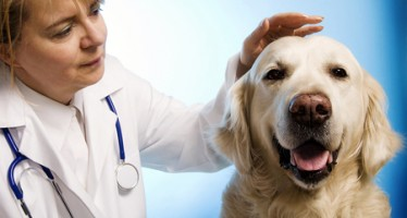Veterinarians Cheated by Florida Broker of Pet Products