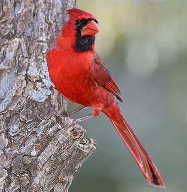 list of state birds