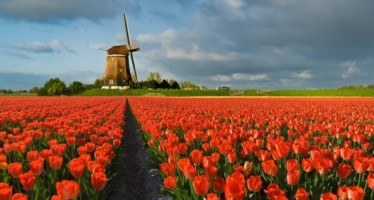 Netherlands Private Investigators and Investigation Agencies